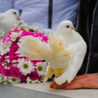 свадебные голуби :: Алина Качайло