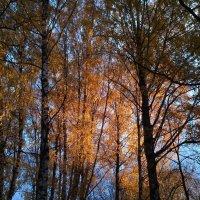 Луч восходящего солнца :: Евгений Плаксин