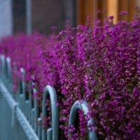 Осенние цветы. :: Дарья