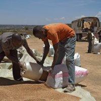 Продажа пшеницы :: Елена Жукова