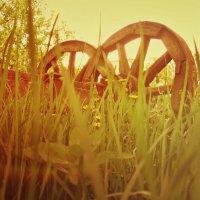 Два кольца... :: Марина Гаель