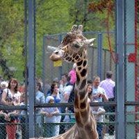 Вот, стоят, глазеют... Жирафа, что ли, не видели? :: Борис Русаков