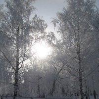 Зимнее солнце :: Alena Cyargeenka