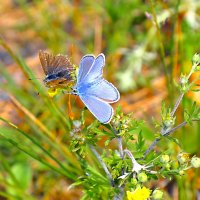 бабочки :: Юрий Бичеров