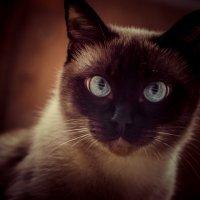Cat :: Олег Кагадий