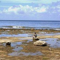 Каменный пляж :: Arman S