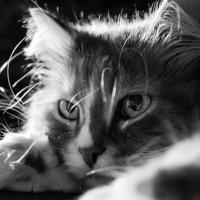 Кот, просто кот :: Oleg Puhaev