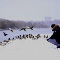 Птицы :: Регина М