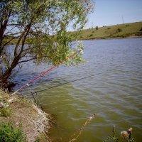 ловись рыбка... :: Svetlana Makarenko