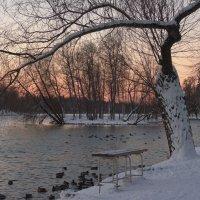 Дерево, которого нет :: sv.kaschuk