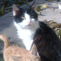 Кошачья семейка :: Натали Жоля