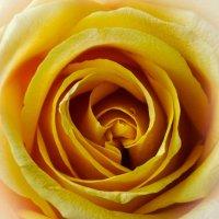 Жёлтый шик :: Светлана