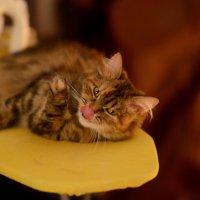 Кошка :: Sergey Bulavin