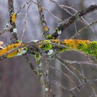 Лесные самоцветы... :: Марина Морозова