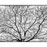 дерево-графика :: Shmual Hava Retro