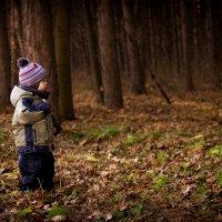 сказочный лес :: Елена Шарафуллина