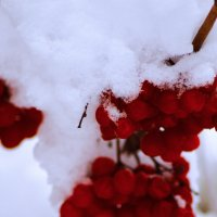 Первый снег :: Александра Козаева