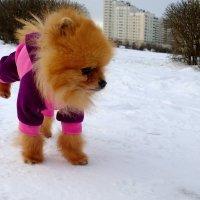 По первому снегу... :: Владимир Супонев