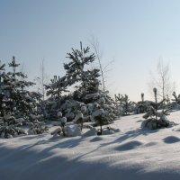 Зима :: Irina