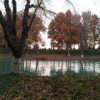 Ташкент :: юлия Силина