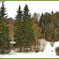 Зимний день в парке :: Олег Попков