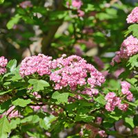 Весна в Красном селе. :: Геннадий Александрович
