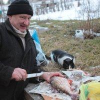 Разделка рыбы :: Николай Денежкин