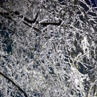 Ice tree :: Мила Соловьева