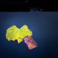 Осень :: Евгений Кузнецов