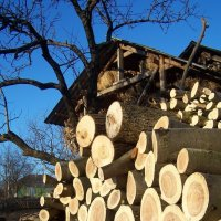 Круги по дереву :: Леонид Плыгань