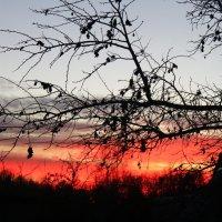 закат :: Ксения Хрепелевская