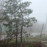 ноябрьский туман :: Сергей Миронов
