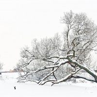 Зима :: Valeriy(Валерий) Сергиенко