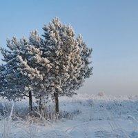 Зима лютует... :: Татьяна Аистова
