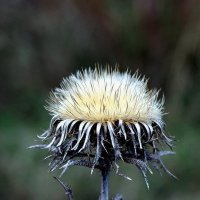 цветок зимы :: юрий иванов