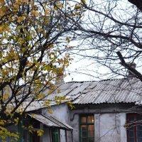 На грани выживания :: Ирина Акимова