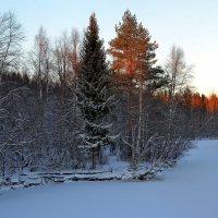 лес гравирован серебром... :: Елена Третьякова