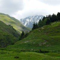 горные овцы :: Malkhaz Gelashvili