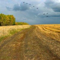 поздняя осень :: Геннадий Ячменев
