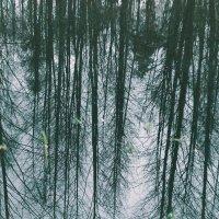 reflection :: Мария Бруцкая