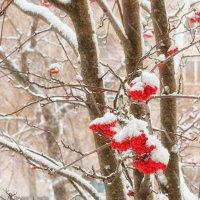 Зима за окном :: Анатолий Тимофеев