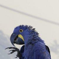 Папугай :: saratin sergey