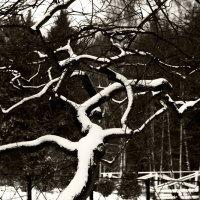 Дерево у озера :: Валерий КАЛЛИСТРАТОВ