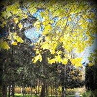 Осенняя пора..Очей очарованье.... :: Svetlana Kravchenko