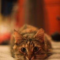 кошка :: Евгений Милько