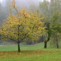Tree with yellow leaves :: Дмитрий Каминский
