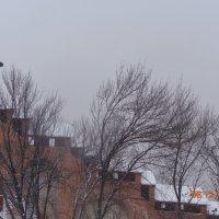 Часовая Башня. :: Ульяна Шнейц
