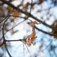 Осень-Зима :: Мария Сидорова