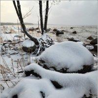 Гримаса нынешней зимы :: Николай Кувшинов