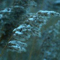зима :: евгений Смоленцев